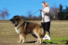 狗的繁殖年限是多少
