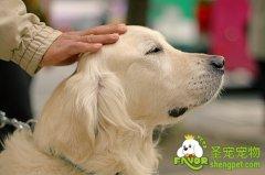 导盲犬介绍