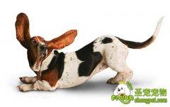给狗狗吃驱虫药的原则及给狗驱虫的注意事项