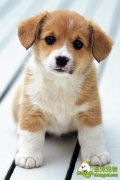 训练狗狗逇记忆意识
