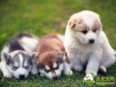 学习如何让狗狗适应各种噪声