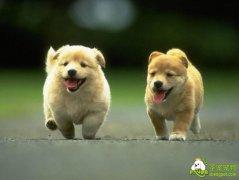 狗狗学习能力的训练