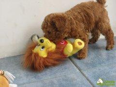 狗狗最喜欢的玩具
