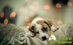 狗的临床检查方法之一般性检查