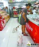 女子领两狗逛超市 工作人员视而不见