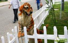 """公园惊现""""老虎""""和""""熊猫"""",速来围观!"""