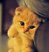 你了解猫咪吗