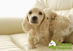 狗狗肠炎病的因素和引发的症状