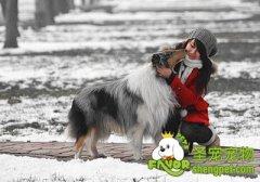 宠物狗冬季护理及注意事项
