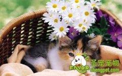 猫咪各种疾病的简单治疗