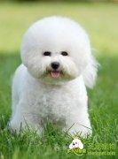 更多矿质元素对狗狗身体健康的作用