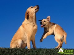 狗狗学习方式——条件反射