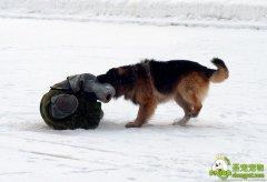 军犬工作的性质和任务