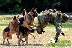 军犬训练教程之第一章:军犬的工作概况