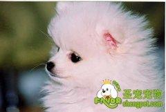 盖和磷的比例对幼犬的重要性