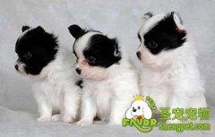 幼犬需要的不同的营养元素