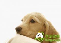 除了饮食对狗狗一些影响的因素