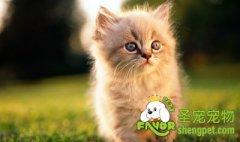矿物质对猫咪营养均衡的重要性