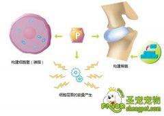 磷(P)在猫咪身体中的作用