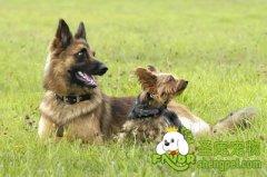 犬的行为的生理基础