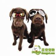 训练狗狗认识常见的生活用品