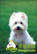 狗狗记名训练