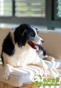 如何纠正狗狗的坏习惯