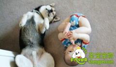 如何让狗狗与孩子成为朋友