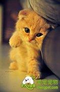 猫咪所需维生素的需求