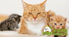 管理好猫咪的饮食频率