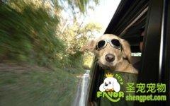 带狗狗旅行前的准备工作
