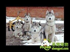冬季宠物健康管理