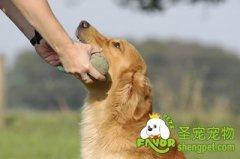 对狗狗有害危险的食物有哪些