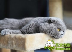 哪些营养元素可以让猫咪的皮毛变的有光泽