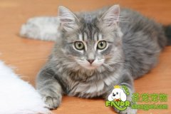猫咪容易得的下泌尿道疾病
