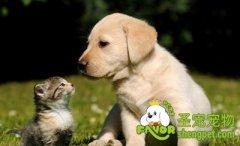 训练狗狗不追咬小动物