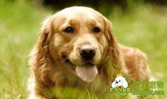 狗狗在犬舍的生活环境应当注意的事项