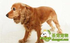 狗狗肠胃疾病的诊断和治疗