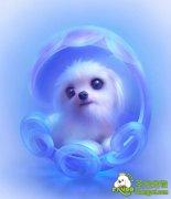 秋冬季节应该给狗狗挑选什么样的沐浴露