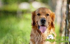 夏季预防您的狗狗受紫外线的伤害