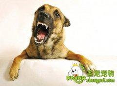 狗狗有哪些食物不能吃