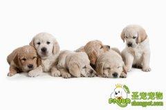 如何照顾好初生的狗狗