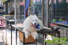 狗狗消暑游泳的必备物品和注意事项
