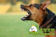 如何训练狗狗让狗狗安静下来