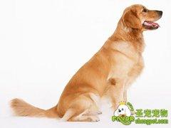 狗狗牙齿的全面护理方法
