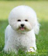 爱犬美容的专业技巧知识