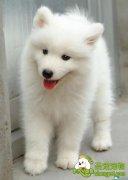 爱犬美容护理常识