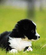 爱犬美容技巧
