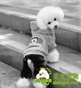 北京首家合法狗市开业 买狗可获发票或收据