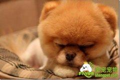 狗狗胰脏的功能